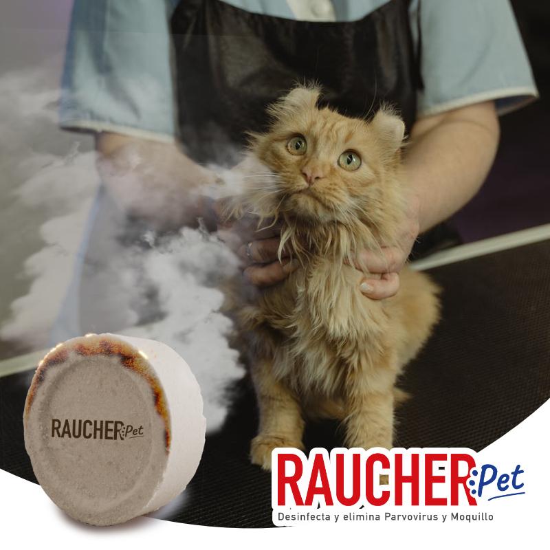 RAUCHER PET EN ESTÉTICAS